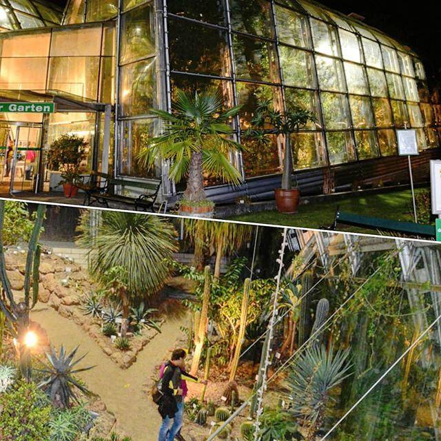 Botanischer Garten Auch Dabei Langenachtdermuseen Wirliebengraz Graz Museum Palmen Palmenhaus Botanischergarten Botanischer Garten Palmenhaus Garten