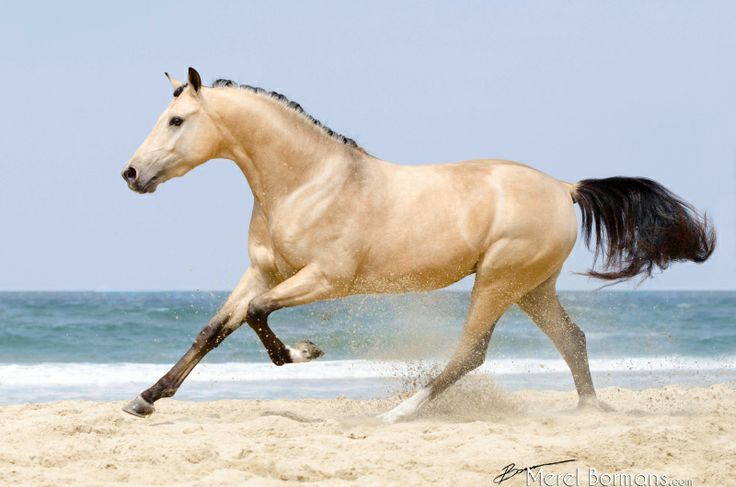 Image result for strange colored horses horses id love horses running on the beach yahoo image search results sciox Choice Image
