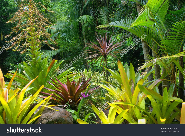 Tropical Garden in Cairns, North Queensland, Australia  Tropical