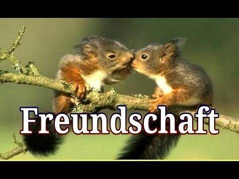 Pin von Heike Wahrn auf Tierfotos | Sprüche über ...