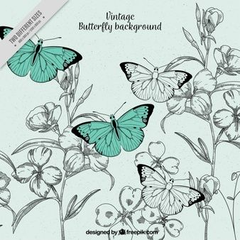 vintage-illustration-background-of-butterflies-and-flowers_23-2147603359.jpg (338×338)