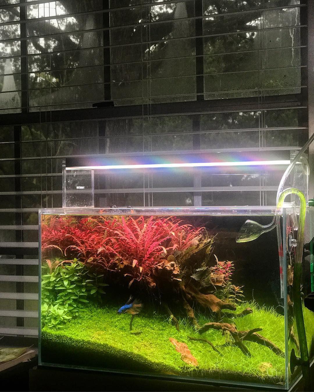 Pin Von Dietmar Silber Auf Aquarium