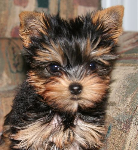 My First Dog An Advice For The