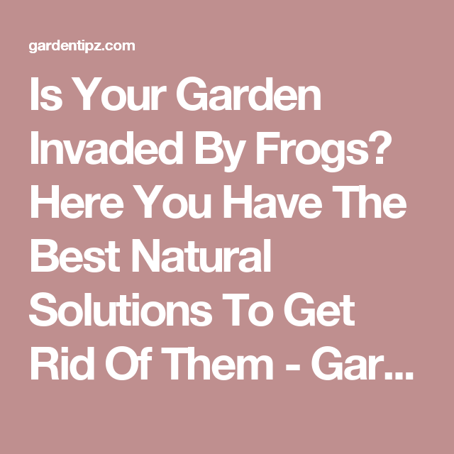 Is Your Garden Invaded By Frogs? Here You Have The Best ...