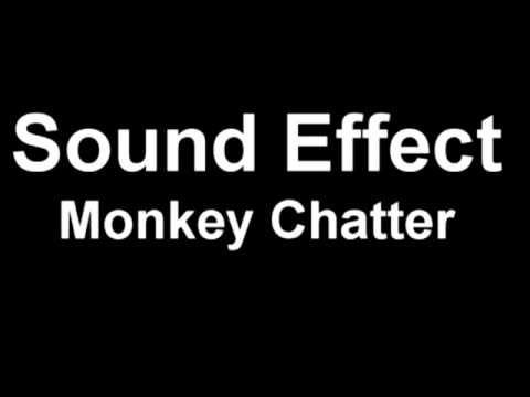 Monkey Chatter Monkey Sounds Youtube Youtube Sound Sound Effects