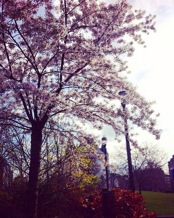 Japon's tree