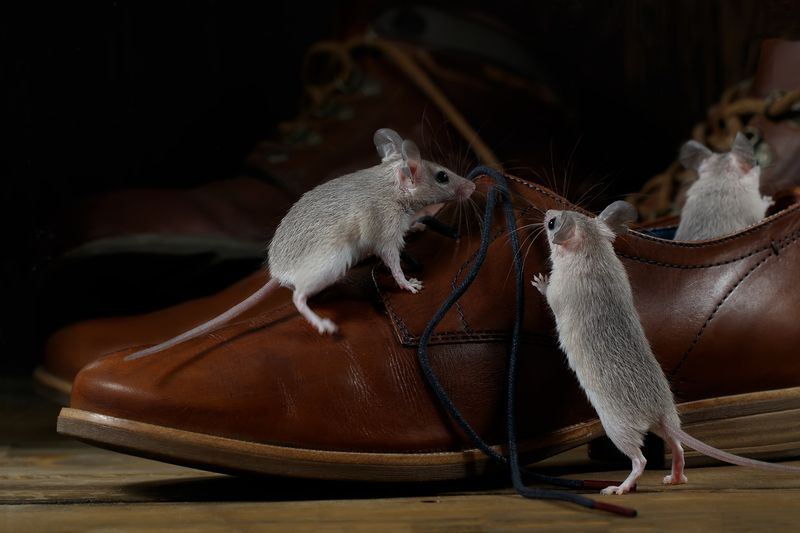 Worried About Mice Trying To Become Your Roommates This Winter Start By Sealing All Cracks And Holes In Your Home S Foundation With Steel O Brown Shoe Brown Shoes