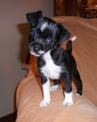 Adopt Boots On Adorable Adoptables Pinterest Dogs Puppies And