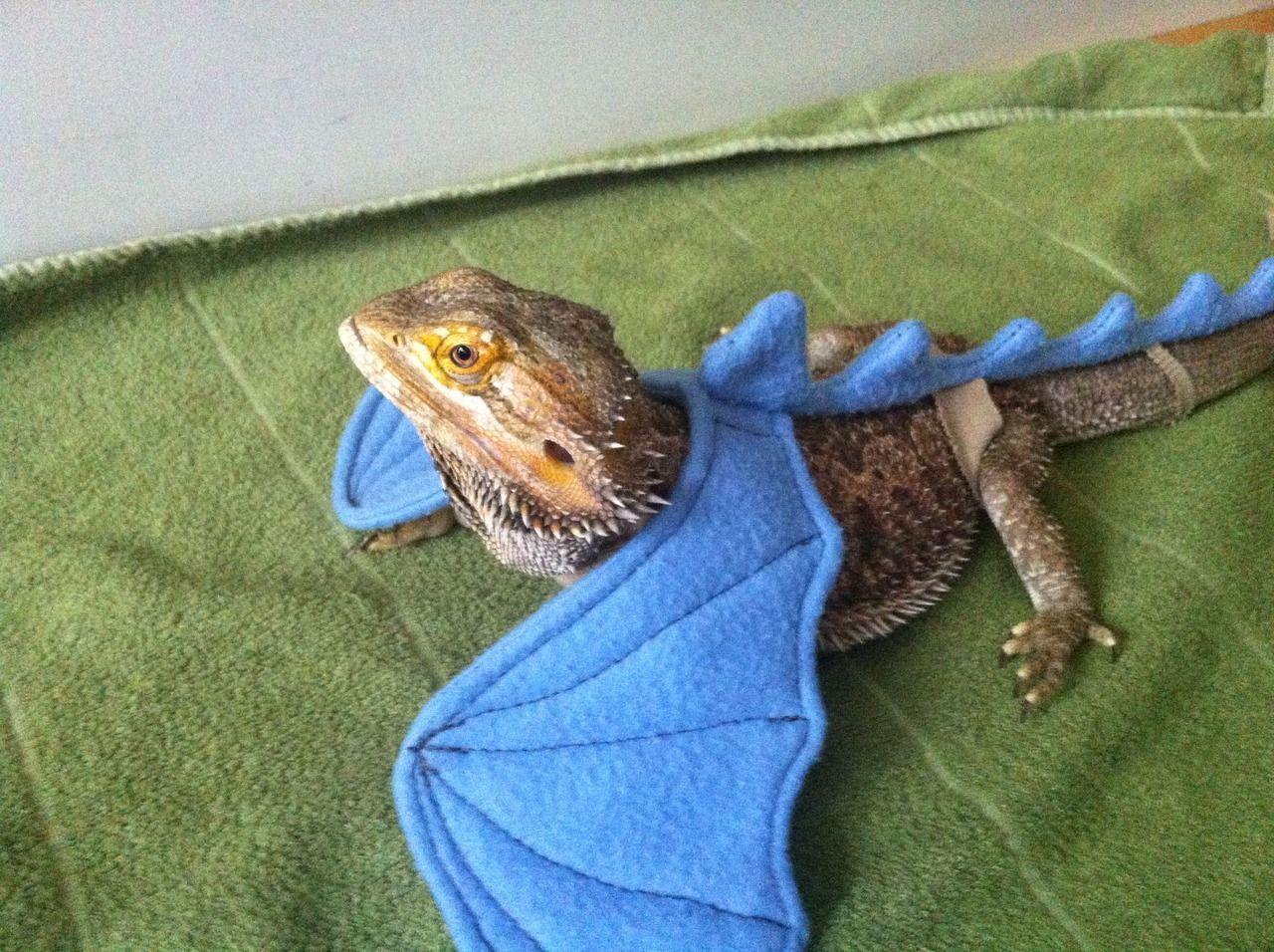 Diane Duane, lizardsenjoyinglife: this bearded dragon enjoys ...