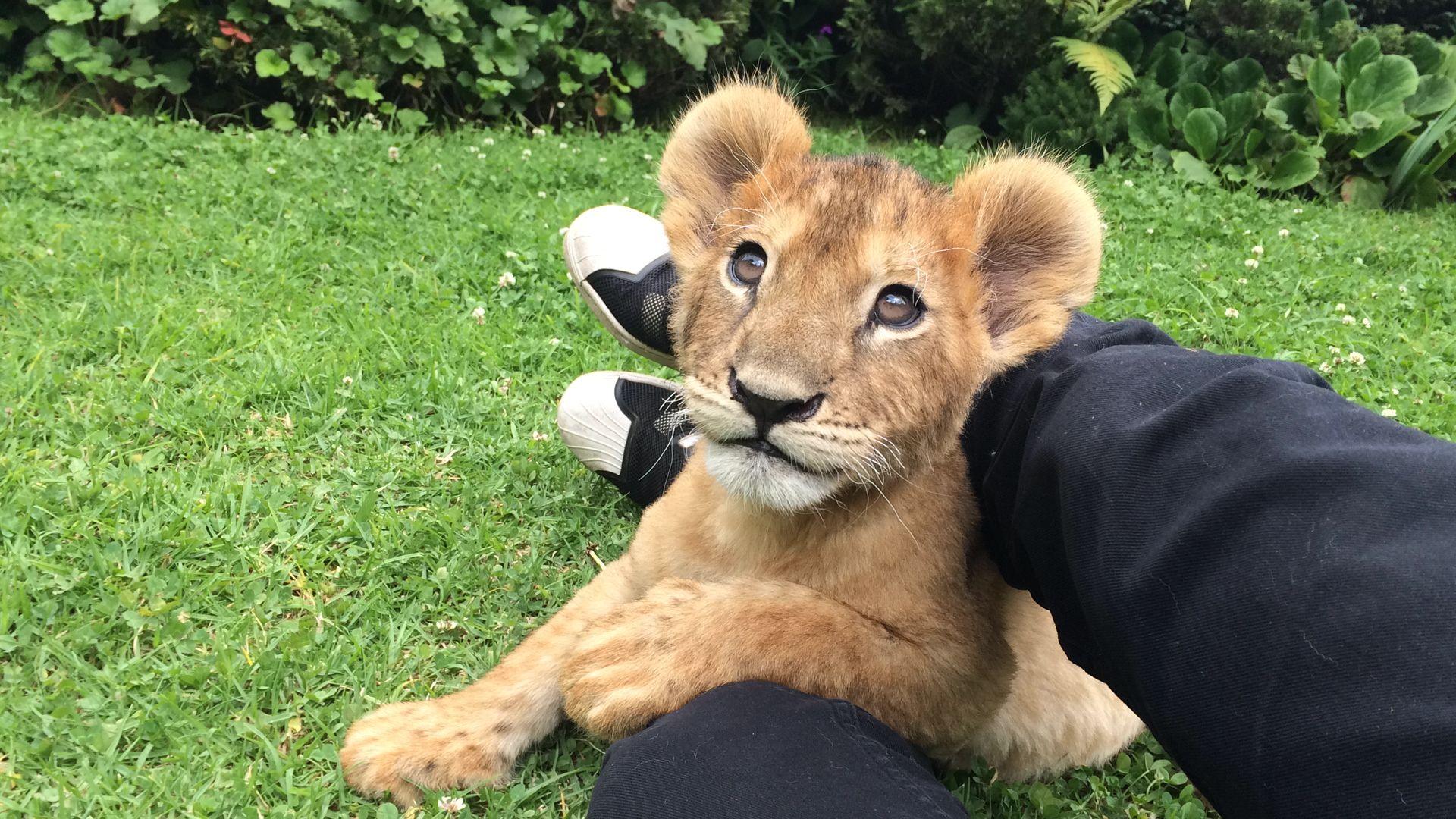 Back Jaguar White Tiger Foundation .. Follow and donate