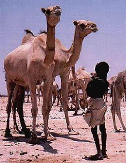 Ogaden Desert - Ethiopia