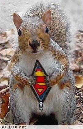 Funny pictures - Super squirrel
