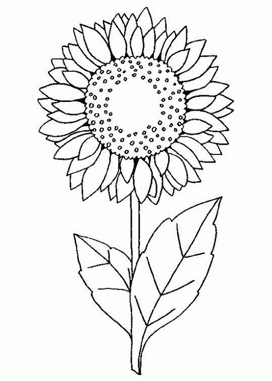 Resultado de imagen para girasol viñeta dibujo