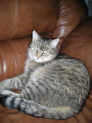 This is my cat ~ Loulou , no longer with us but she was the most beautiful cat ❤