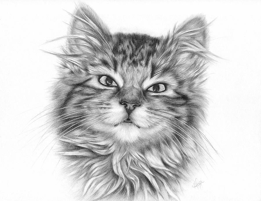 Seven - Tabby Kitten Drawing Fine Art Print by Heather ...