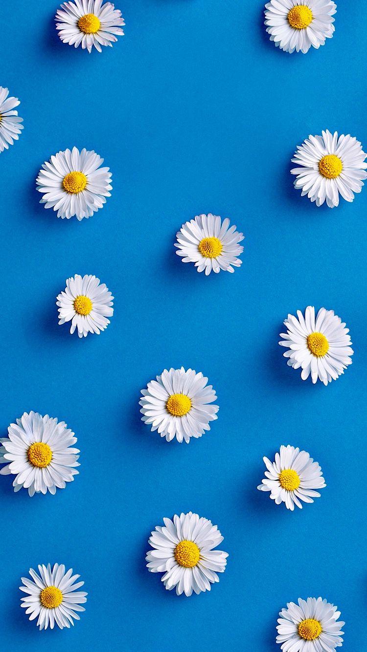 Flowers #minimal #wallpaper