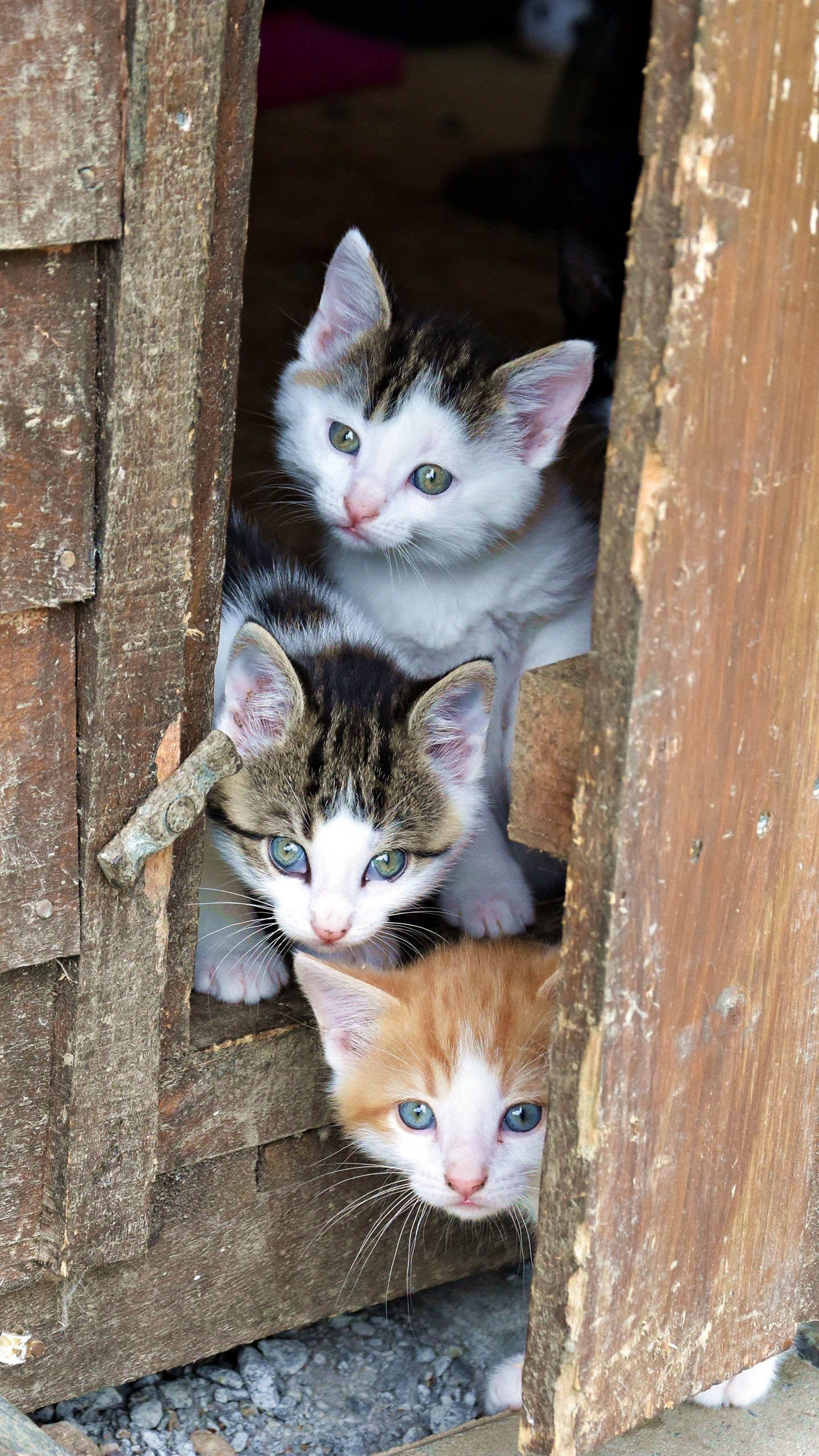 3 Cute Kittens Cats Kittens Cutest Cute Cats