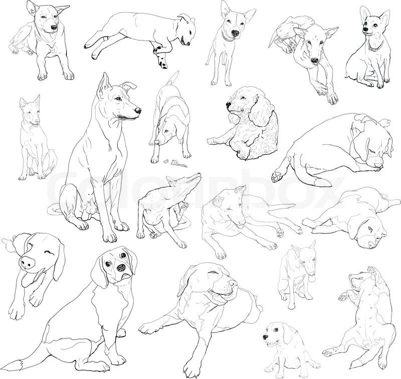 Art Sketch How To Draw A Dog