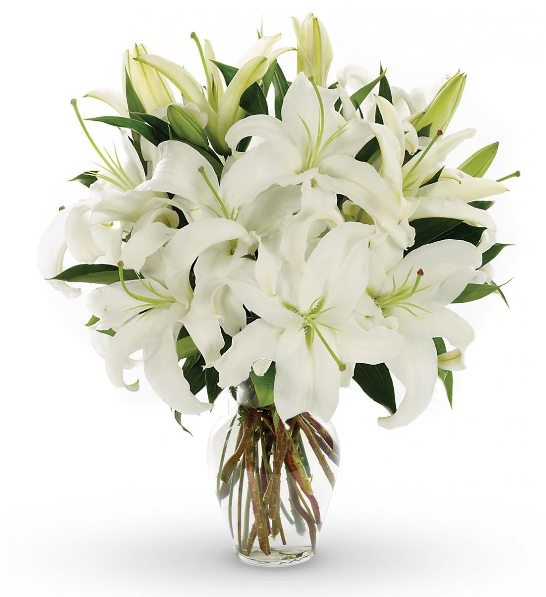 Best And Cheap Flower Delivery In Bangalore For More Details Http