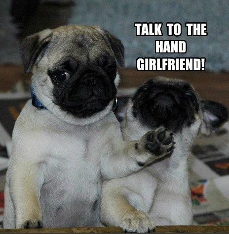 Dog Shaming Cute Pugs Pugs Funny Dog Memes