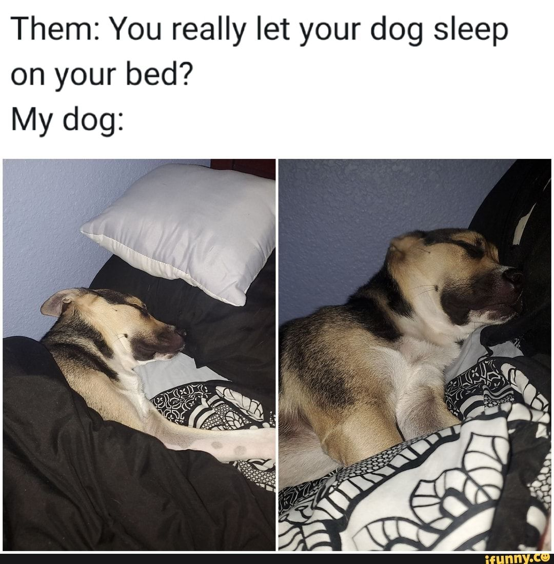 Them You Really Let Your Dog Sleep On Your Bed My Dog Ifunny Sleeping Dogs Your Dog Dogs