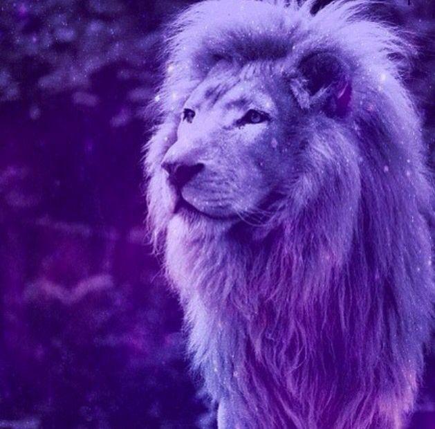 Purple Lion 3 In 2019 Lion Images Purple Aesthetic Big