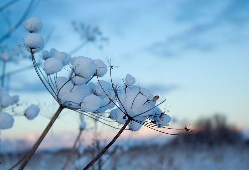 Winter solstice | Vintersolverv  Purodeco Feng Shui