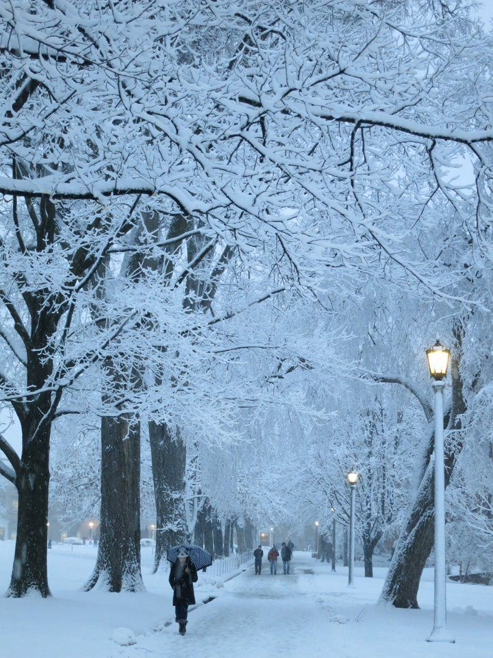 Saturday Morning Snow In Madison >> Bascom Hill On A Beautiful Winter Morning On Wisconsin