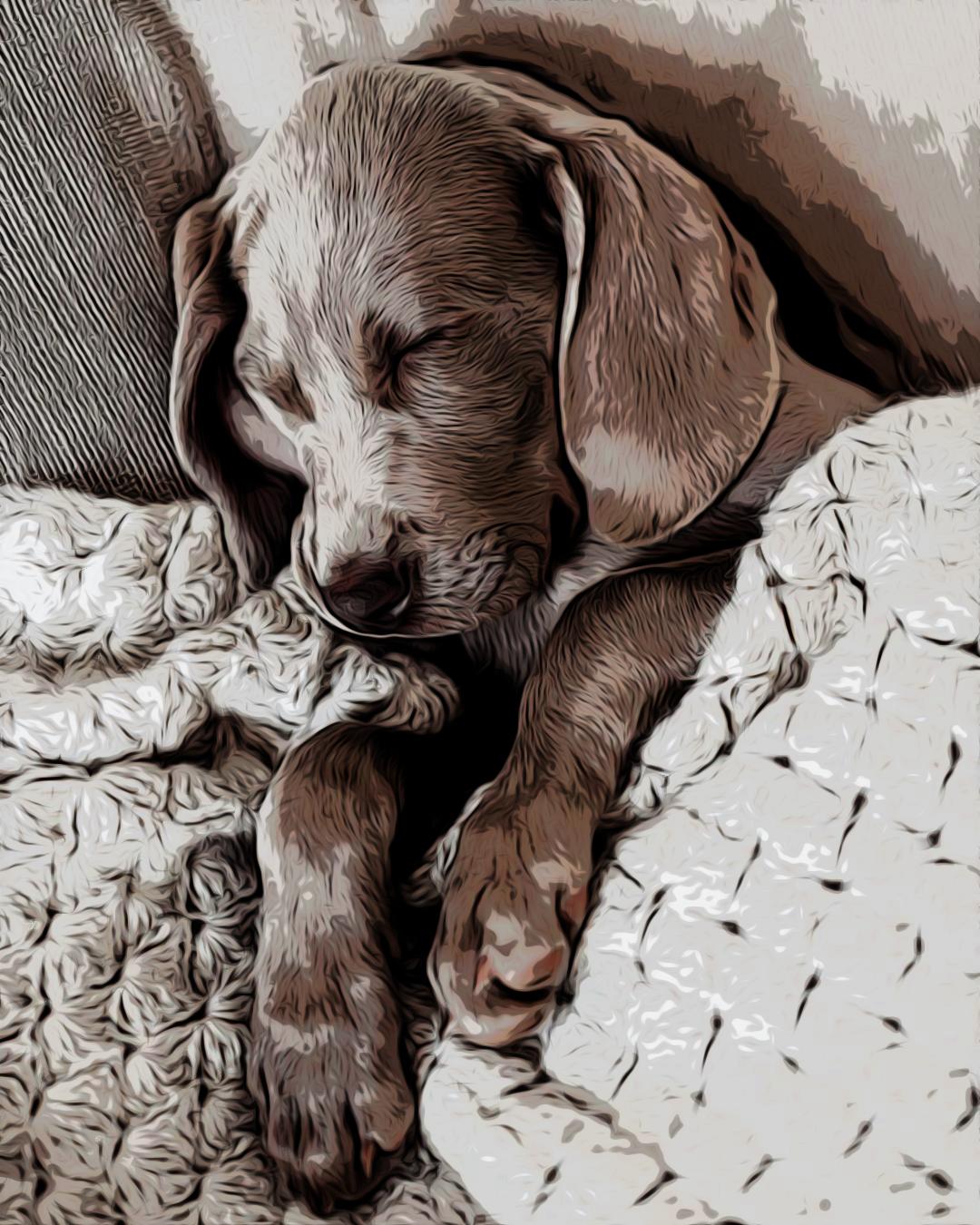 Kleiner Schlafender Hund Puppy In 2020 Schlafende Welpen Hunde Schlafen Kleine Hunde