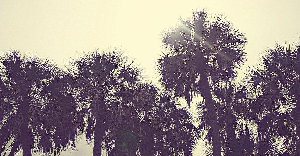 palm trees tumblr vintage. Vintage Palm Trees By Laughablelauren Tumblr
