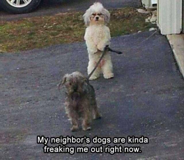 Photo of Más de 30 divertidos memes de animales para reír hasta que te caigas