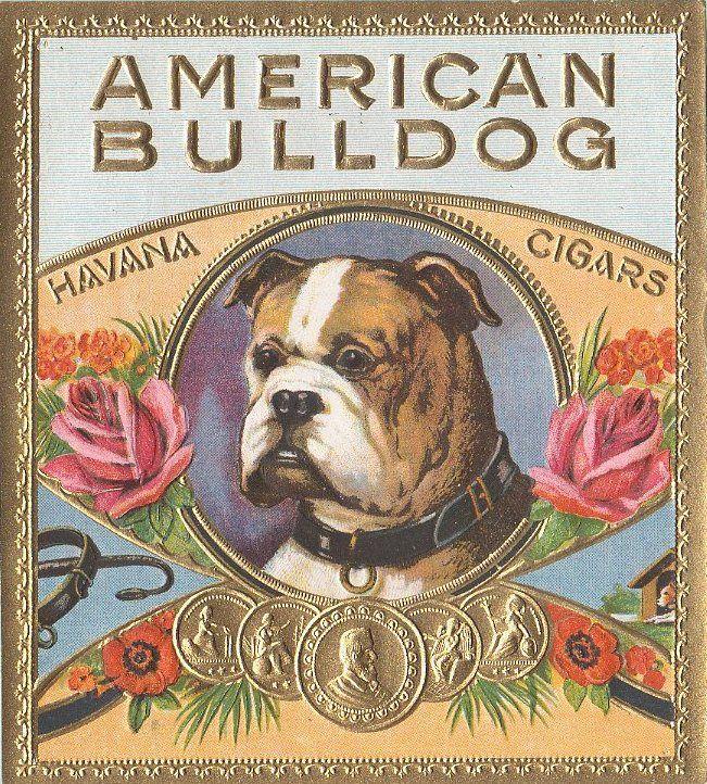 American Bulldog American Bulldog Dog Love American Bulldog Mix