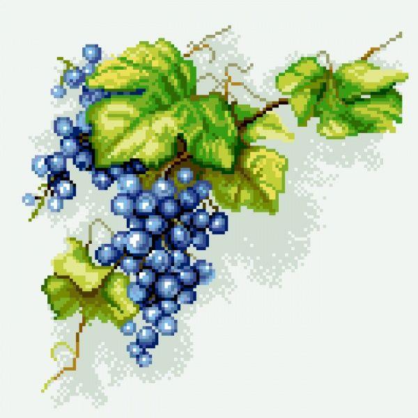 winogorna-kiść-winogron-no-7293.jpg (600×600)