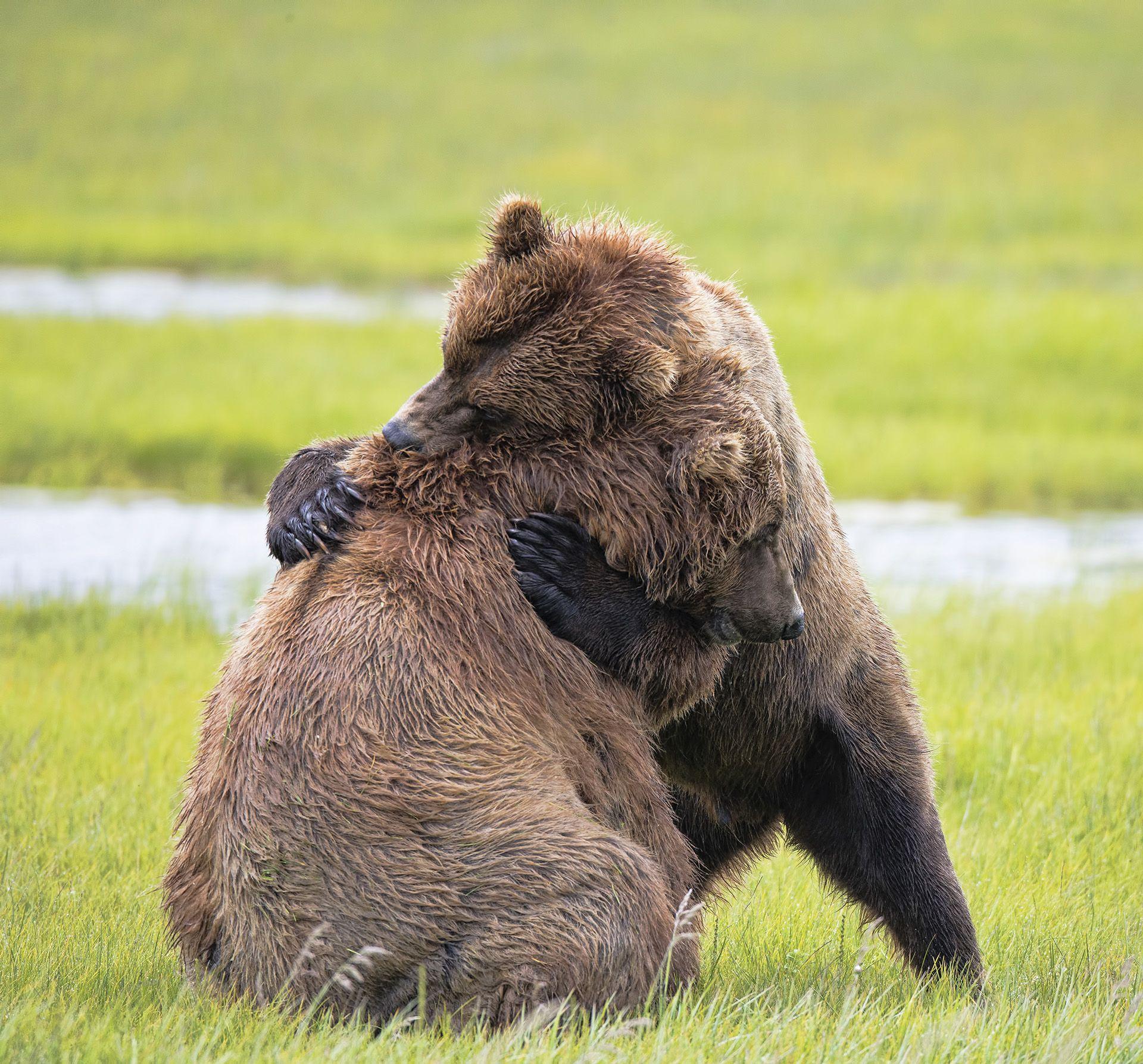 первую животные которые обнимаются фото красоту можно