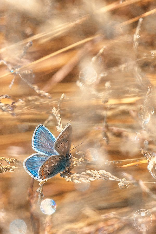 Remember the butterflies, Mum ~ I know u loved them....