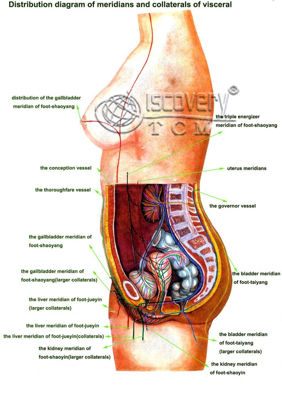 Organ Map Human Body Human Body Anatomy Pinterest Human Body