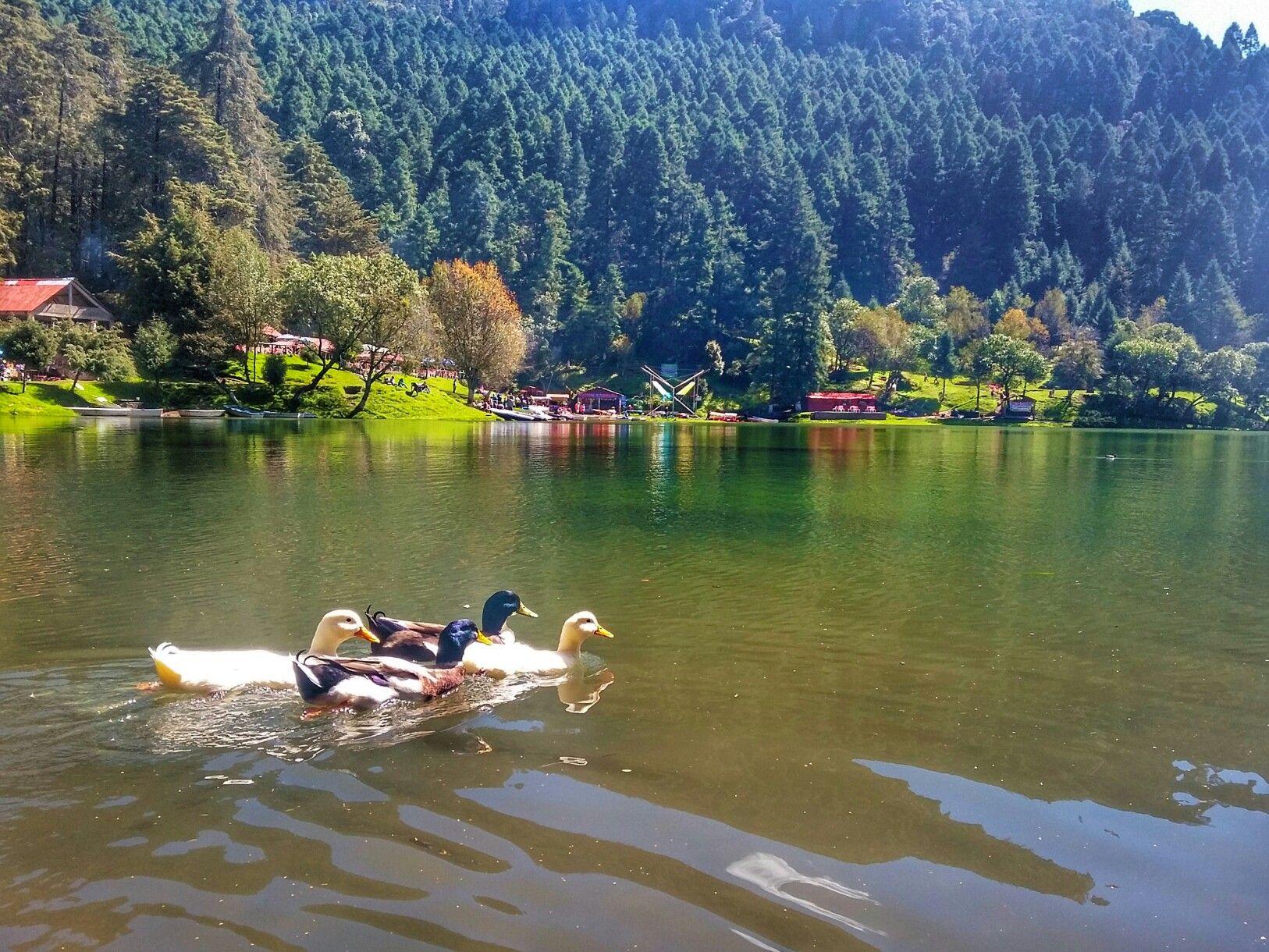 patos nadando por la presa El Cedral