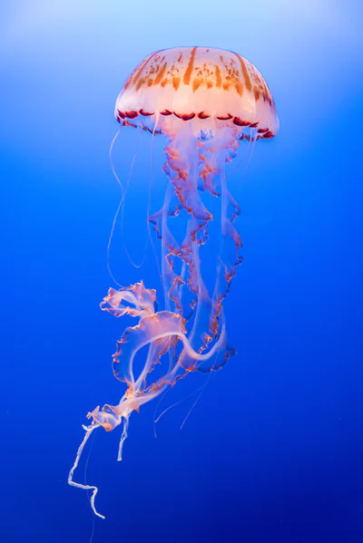 500+ Jellyfish Pictures [HD] | Download Free Images on Unsplash