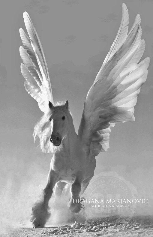Pegasus Cheval Aile Art A Theme Cheval Animaux Mythiques