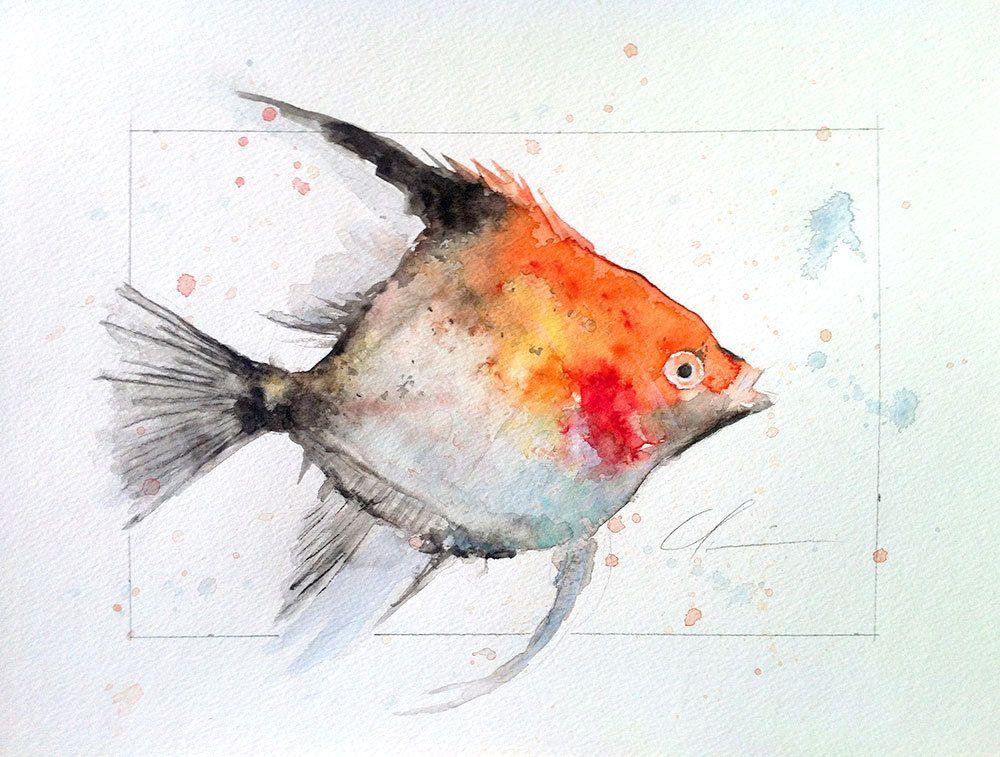 Beautiful Black and Orange Red, White Angel Fish, Tropical ...