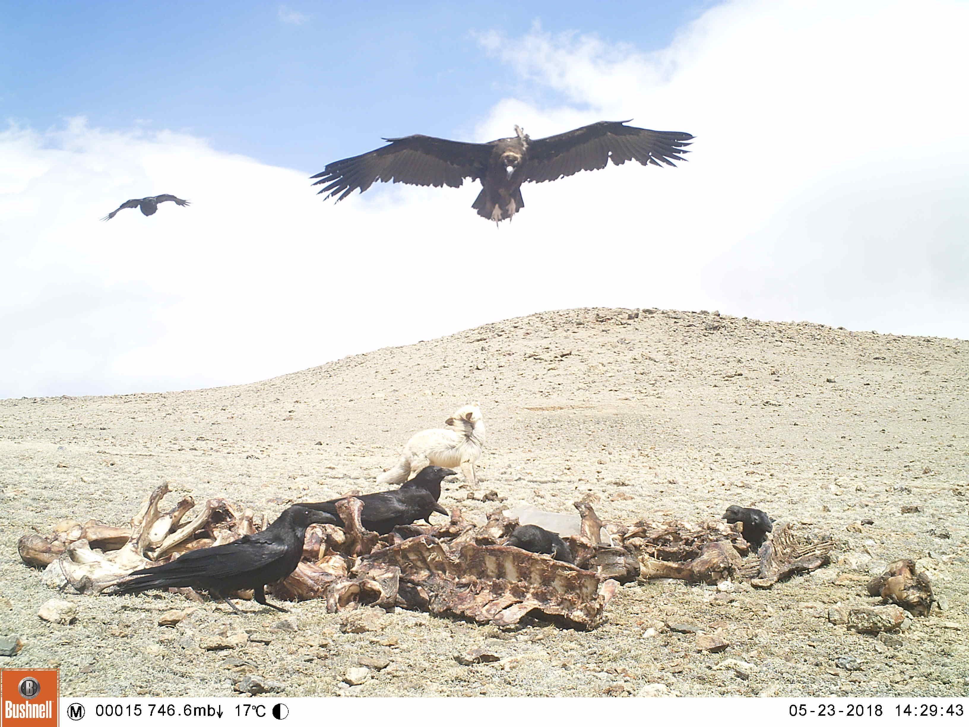 «А мне летать охота …» или удивительные кадры из мира ...