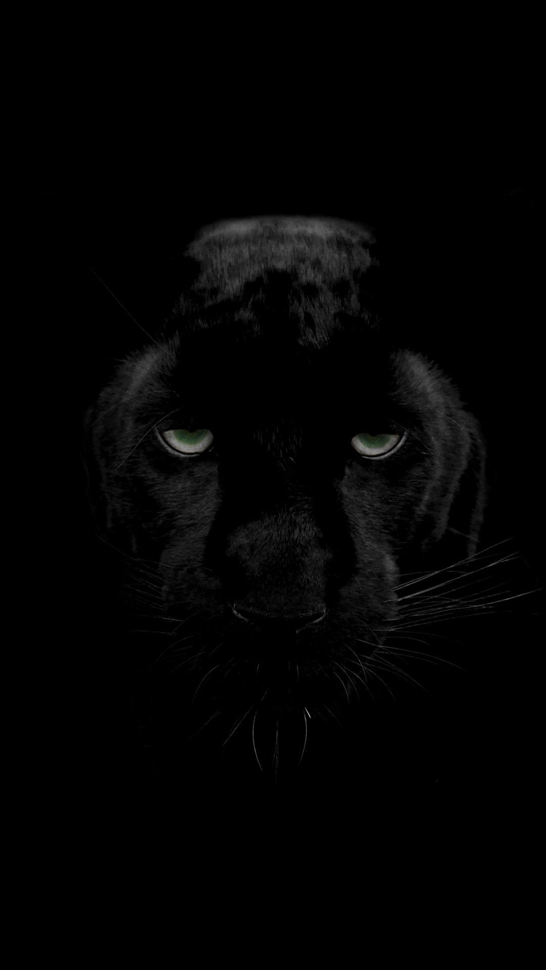 Black Panther Wallpaper 4k Iphone 3d Wallpapers Animal Wallpaper Black Panther Black Wallpaper