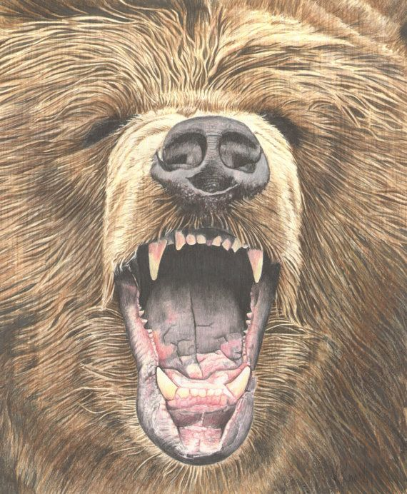 Grizzly Bear Drawing In Color Growling Grizzl...