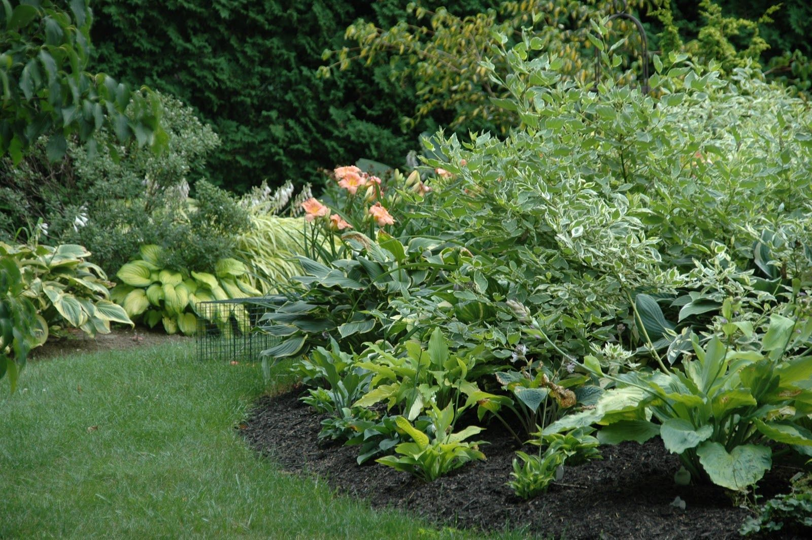 Plant Nursery Centers Online Garden Center Plants