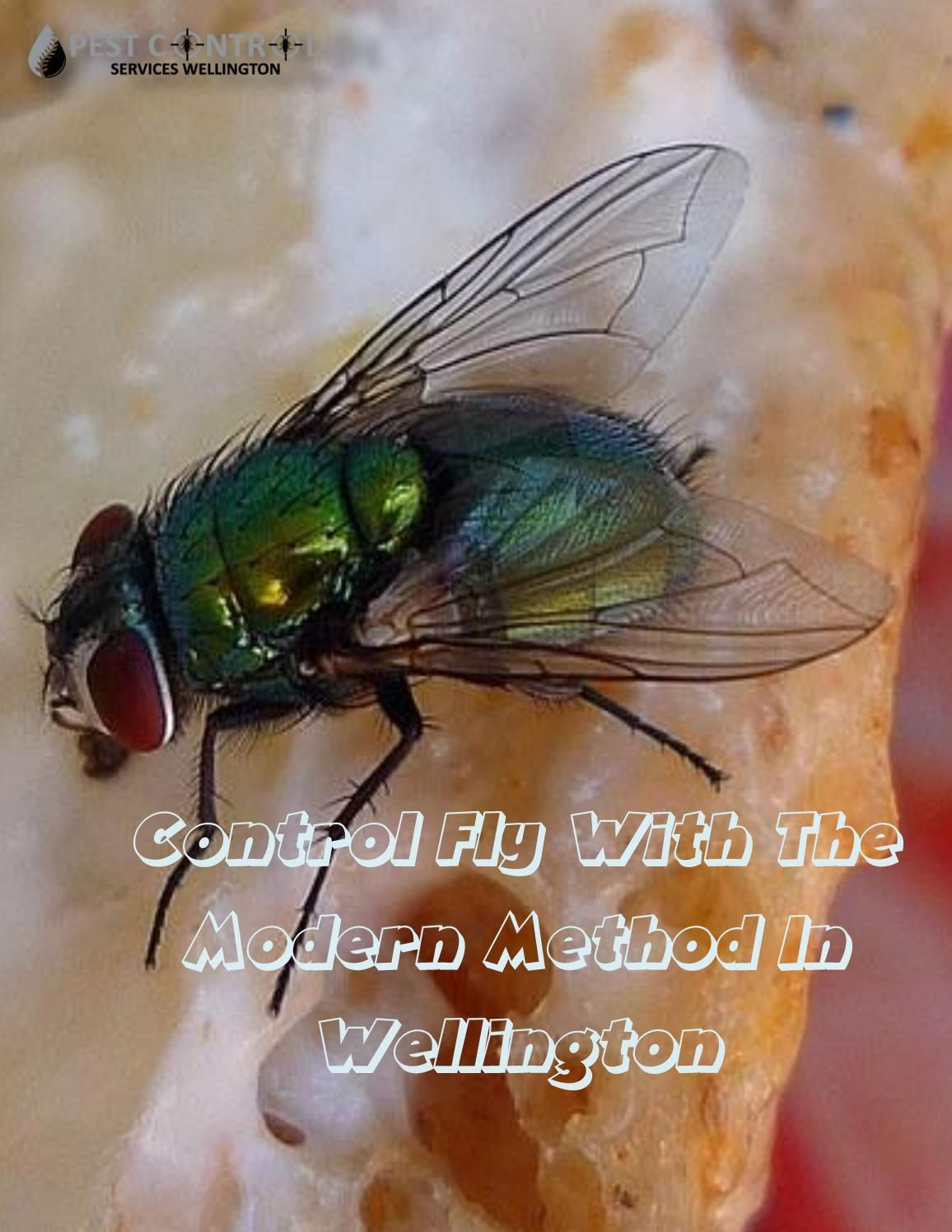 Control Fly With The Modern Method In Wellington Pest Control