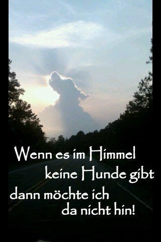 hund im himmel   Hundesprüche, Hundehimmel, Hunde