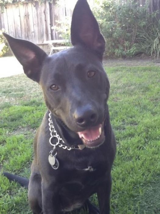 Ark Animal Space Animals Pitbull Mix Dog Lovers