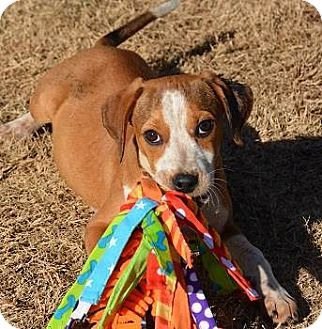 Pin By Audrey Fries On Animals Adoption Rescues Beagle Mix