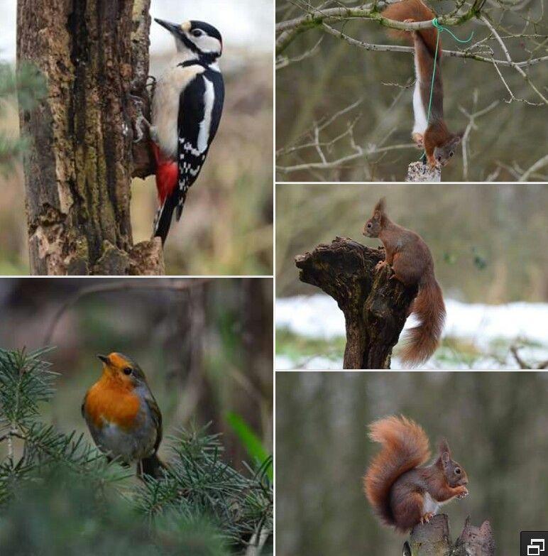 In de nattur, vogels en eekhoorns