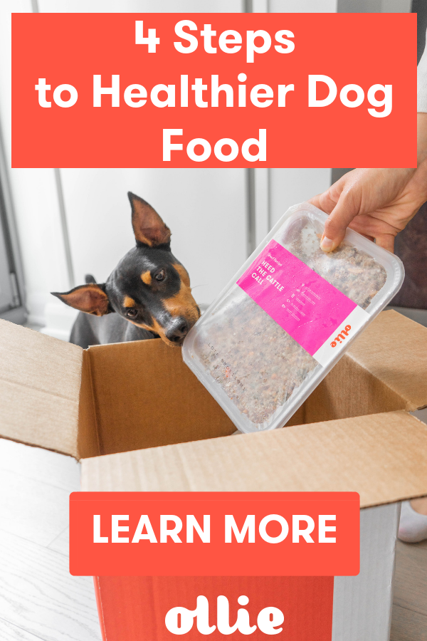 Feeding Your Dog Healthy And Wholesome Food Is One Of The Best